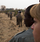 Sunrise Elephant Safari
