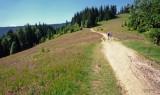 trail to Turbacz - highest peak of Gorce