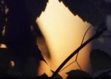 zmierzch - twilight
