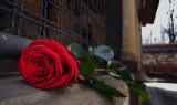 z_kiss from a rose