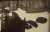 shadows in a kitchen (C'est la vie)