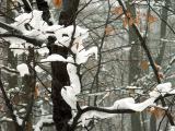 sniegowe szale