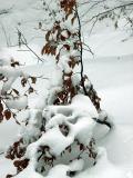 pod ciezarem sniegu