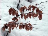 spod sniegu
