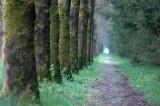 Langs het pad
