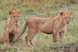 KENYA: Mammals