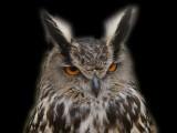 owl pic copy_800x600.jpg