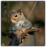 Tree Rats -- a.k.a. squirrels