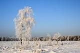 Winter in de Liereman (Oud-Turnhout)