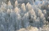 2009-01-10_326.jpg