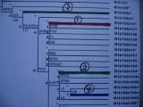Hooks DNA SNP Map