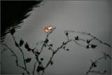 Natur_061128_2751.jpg