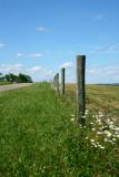 Summer Sunday - Fenceline