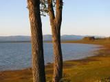 deux arbres devant le paysage