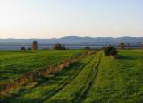 les champs verts