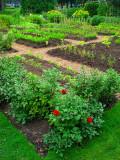 les carrés du jardin