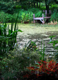 The little pond