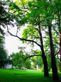 les arbres ont un coté majestueux