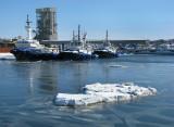 le port glacé