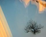 l'arbre irréel