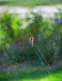 du travail pour l'araignée
