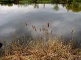 composition avec étang