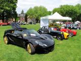 Lotus noire