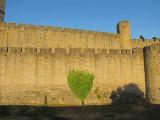 l'arbre plat contre les remparts