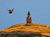 le pigeon qui a peur de la gargouille