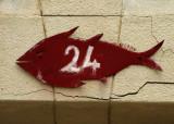 poisson rouge 24