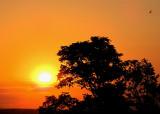 L'aube orange