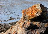 Lichens sur roche