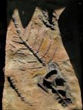 faux fossile
