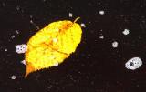 feuillage spatial dans la galaxie mousse de rivière