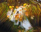 bave d'automne