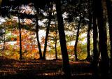 sous-bois d'automne