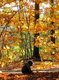 collectionneur de feuilles