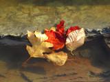 Une tache rouge dans les  feuilles
