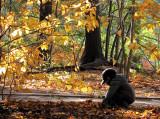 le petit garçon et l'automne