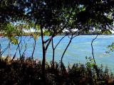 le fleuve derrière les arbustes