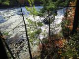 la rivière derrière la forêt