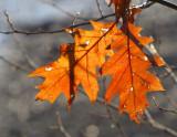 Paire de feuilles