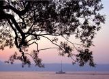 le petit bateau sous le gros arbre