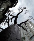 Baobab urbain