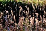 le champ de fleurs