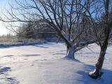 L'arbre au bord de l'étang