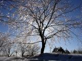 L'arbre à verglas