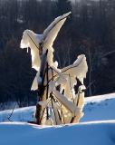 ptérodactyle glacé