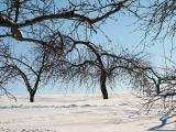 verger en hiver