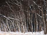 la forêt enneigée
